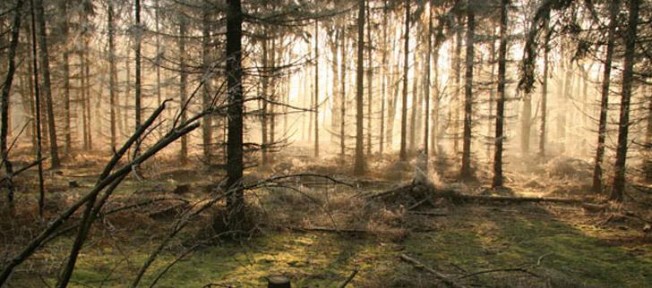 Bosrijk omgeving