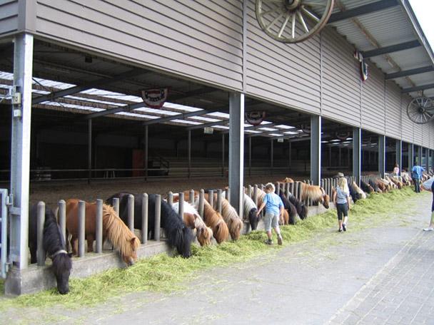 Ponyparkcity Shetland Pony's