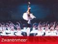 Win gratis Zwanenmeer kaartjes!