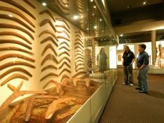 Aboriginal Museum Nederland