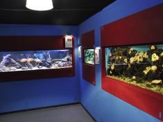 Aqua Zoo Leerdam 2
