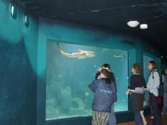 Aquarium Wilhelmshaven