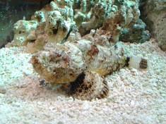 Aquarium Antwerpen