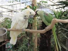 Avonturia De Vogelkelder