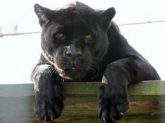 Best Zoo Nederland