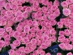 Bloemenveiling Aalsmeer Nederland
