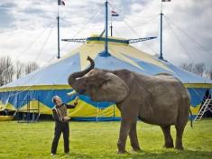 Freiwalds Menagerie Circus