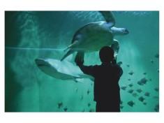 Grand Aquarium Frankrijk