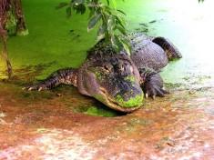 Iguana Reptielenzoo