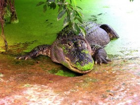 logo Iguana Reptielenzoo
