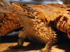 Iguana Reptielenzoo Nederland