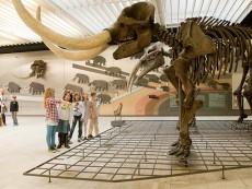 Naturmuseum Senckenberg foto 1
