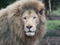 Olmense Zoo foto 1