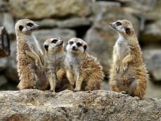 Opel Zoo foto 1