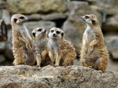 Opel Zoo Duitsland