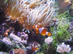 Aquarium Brussel
