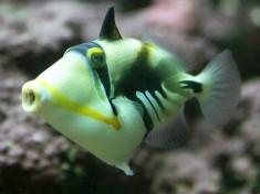Openbaar Aquarium Brussel België