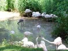 Zoo Ebbs