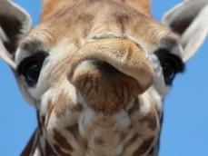 Safaripark Beekse Bergen foto 1