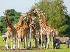 Safaripark Beekse Bergen Nederland