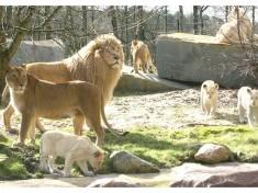 Safaripark Stukenbrock Freizeitpark Deutschland