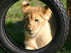 Safaripark Stukenbrock Zoo