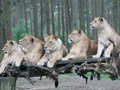 Serengeti Park Deutschland