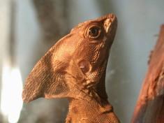 Reptielenzoo Serpo Nederland