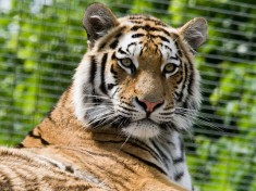 Zoo Wenen
