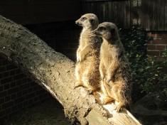 Tierpark Cottbus Deutschland