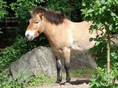 Tierpark Neumuenster Deutschland