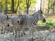 Tierpark Stadt Haag Österreich