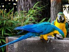 Zoo Ströhen