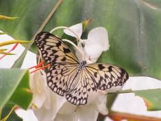 Vlinders aan de Vliet Nederland