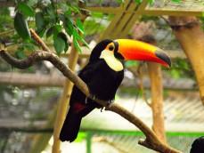 Weltvogelpark Walsrode foto 1