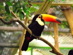 Weltvogelpark Walsrode 1