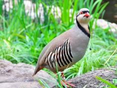 Weltvogelpark Walsrode 3