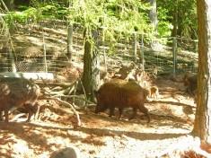 Wild- Und Wanderpark Silz Deutschland