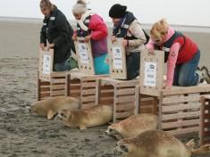 Zeehondencreche Nederland