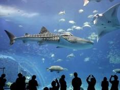 Zoo Aquarium Berlin