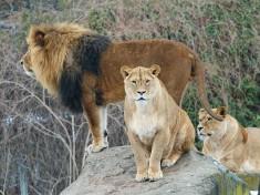 Zoo Augsburg (stad)