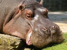 Zoo Berlijn