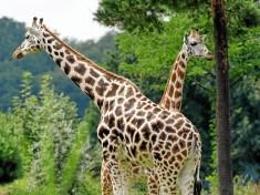 Zoo Leipzig Gutschein 2019 - Gutschein4dich de