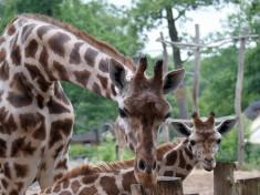 Zoo Schwerin Deutschland